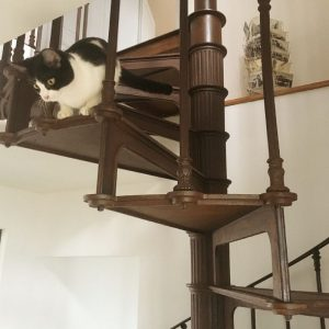 Curious cat on French spiral staircase